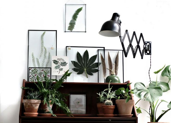DIY: gedroogde planten in transparante lijstjes - Alles om van je ...