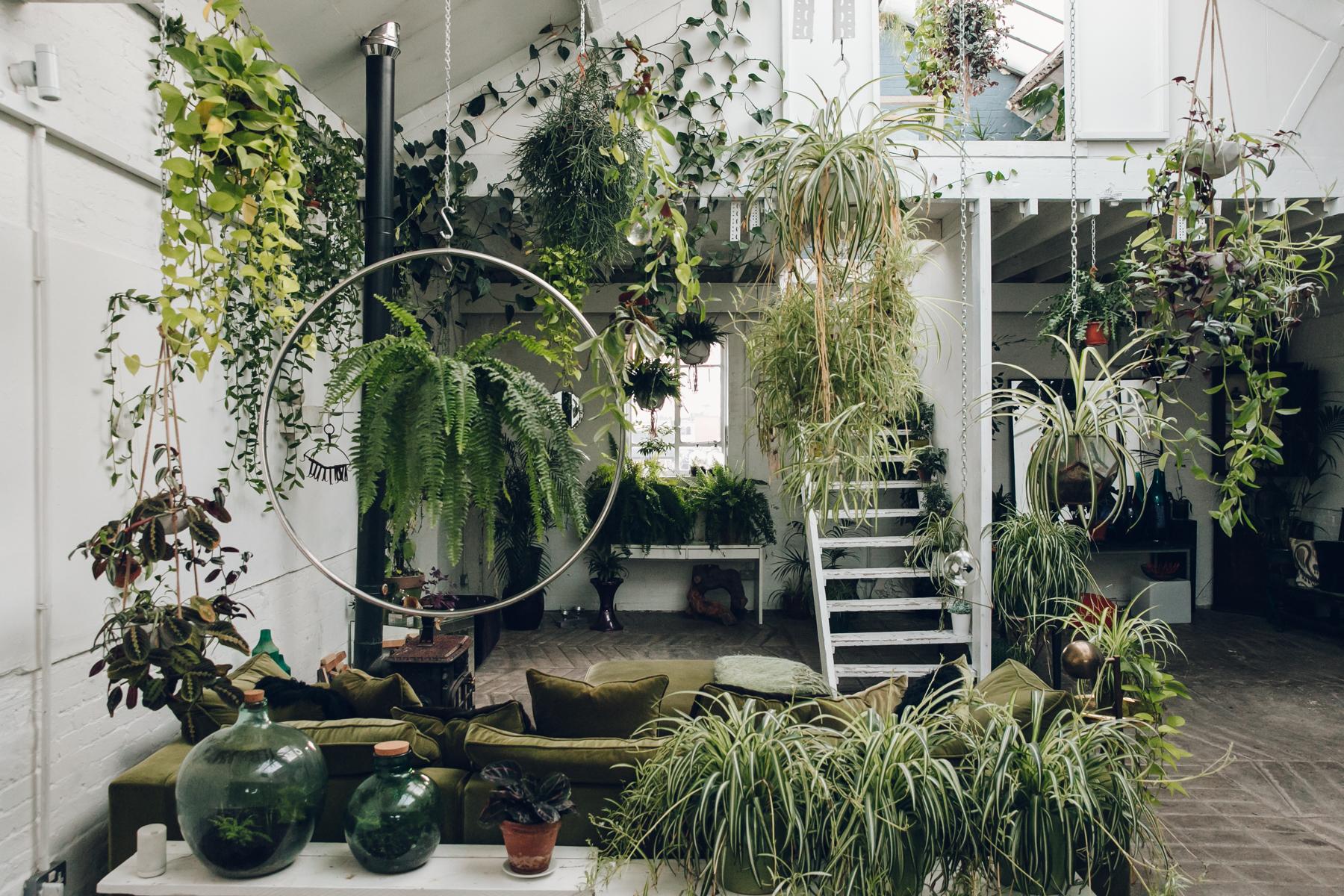 met deze planten in de slaapkamer slaap je veel beter alles om van je huis je thuis te maken homedeconl