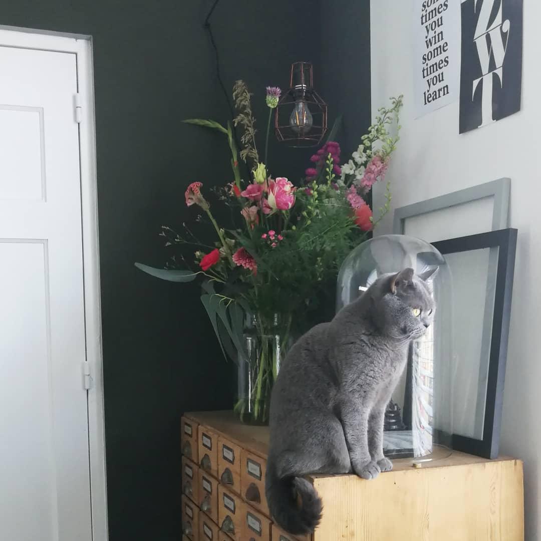 woonaccessoires met grijze kat