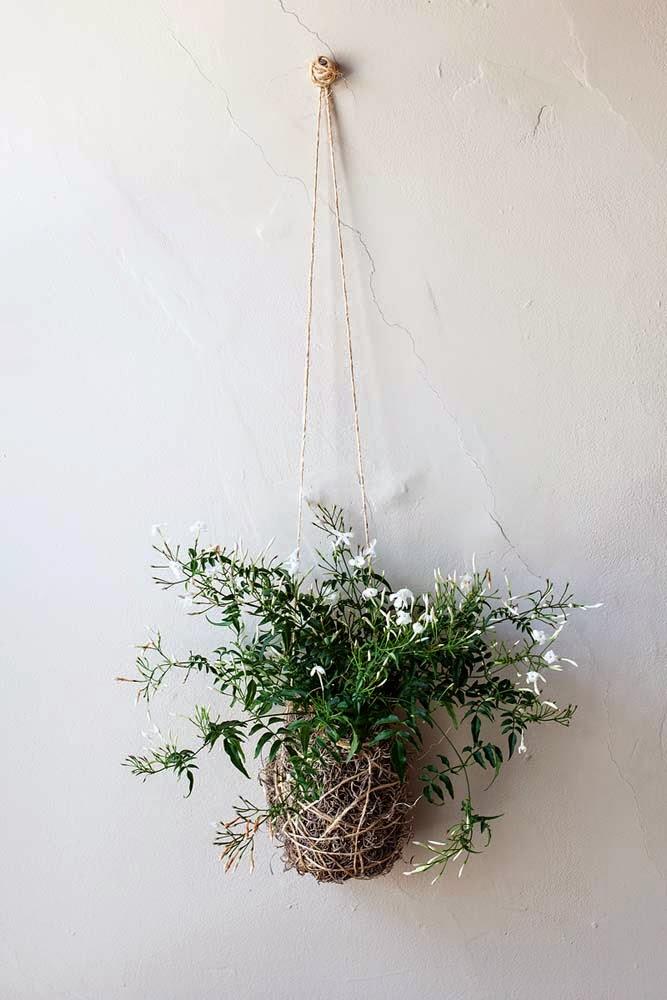 Met deze planten in de slaapkamer slaap je veel beter - Alles om van ...