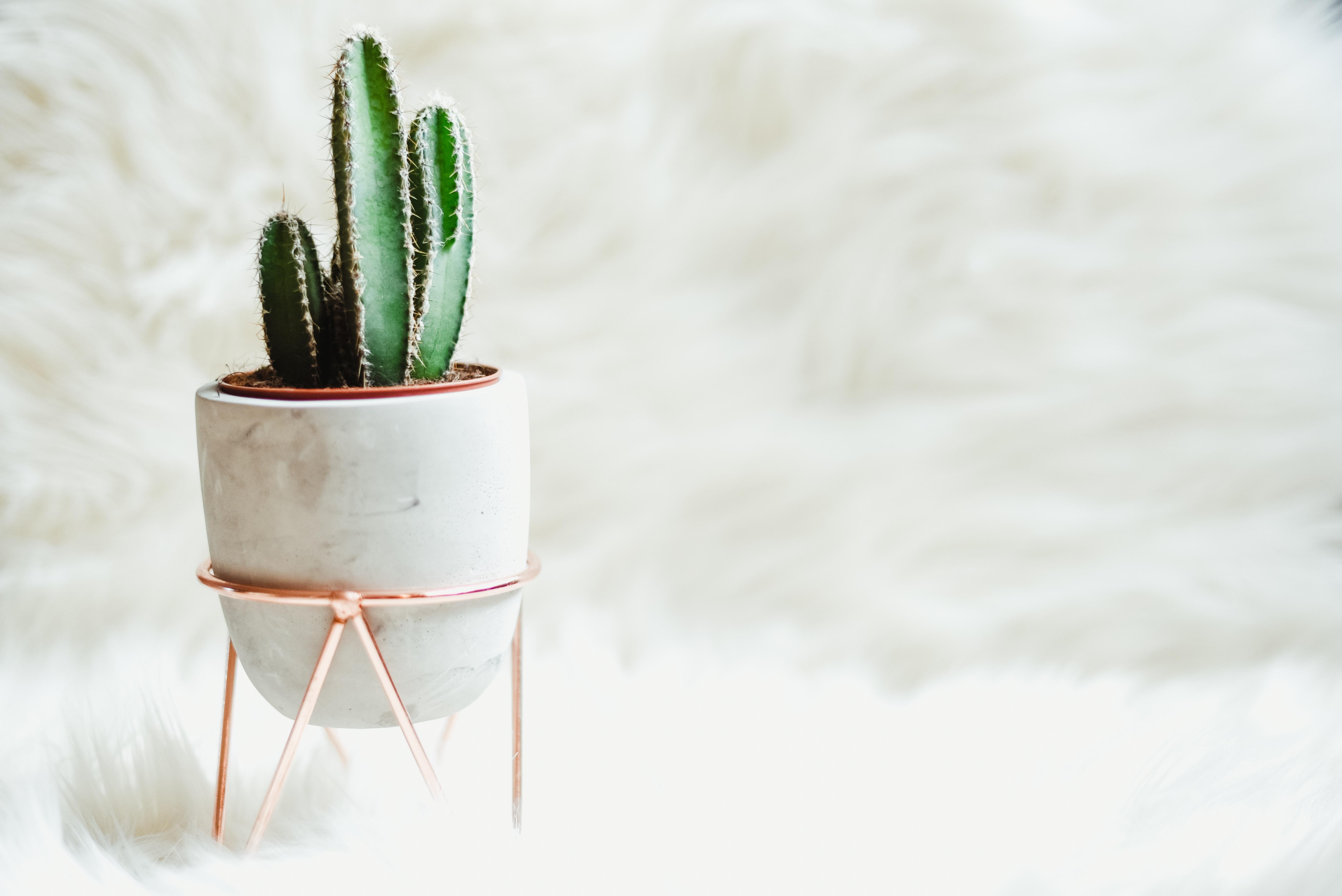 cactus verzorgen planten
