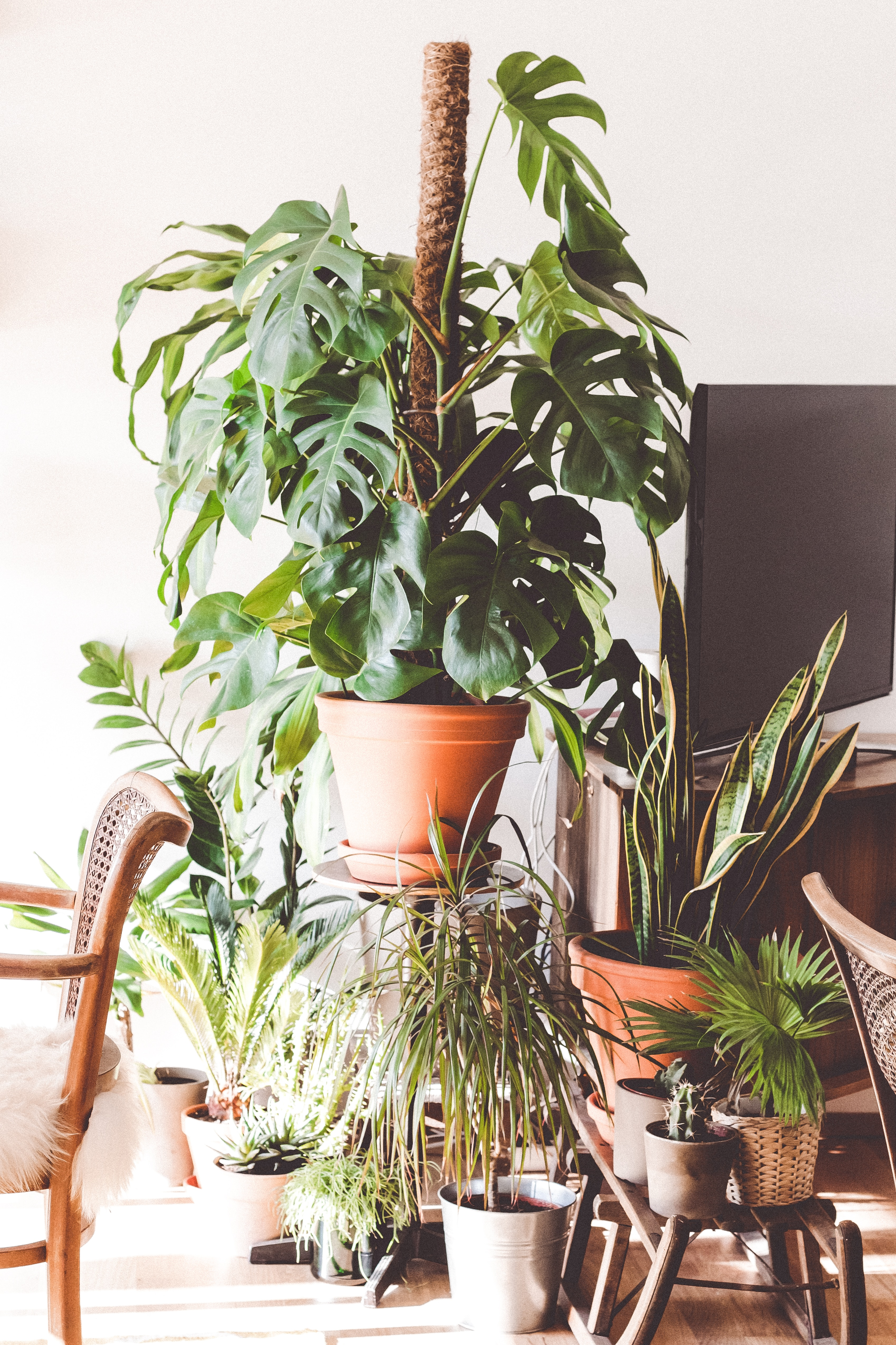 planten kamerplanten luchtzuiverende interieur